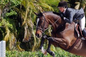 Produkte an, denn sie sind auf die Bedürfnisse des Pferdeverdauungssystems angepasst sind