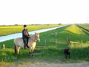 Wanderreiten in Schleswig-Holstein