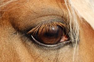 Equidenschule für Pferd und Reiter
