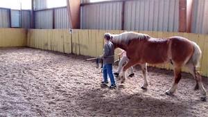 Freude mit dem Pferd