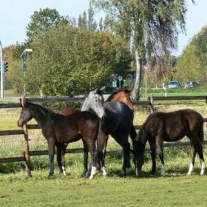 Gut Wian ... im Land der Pferde