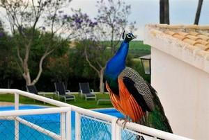 Gästehaus mit großem Süßwasser-Pool direkt auf der Hacienda Buena Suerte