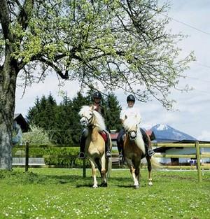 Reiten auf dem Hof Hauserwirt in Tirol