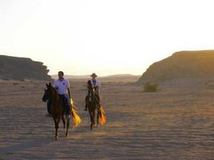 Gamila Stable - die Fazination der Wüstenlandschaft