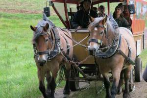 Kutschfahrten und Planwagenfahrten