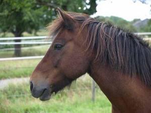 Ein Pferd von der Wiesentalranch