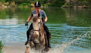Mit dem Pferd ins Wasser