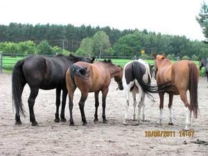 Pferdeausritt von unserem Reiterhof Zum Rappen