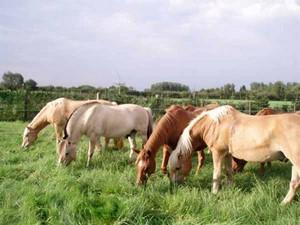 Die Pferde vom Rosenhof