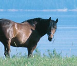 Ein Pferd von unserem Reitstall
