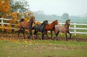 Pferdehof Altkamp - Ihr Reiterhof auf der Insel Rügen