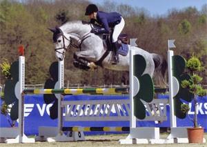 Sportpferde vom Pferdeservice Karle