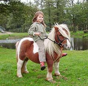 Ponyreiten Kinderreiten Mici Ponei