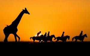 Pferdesafari in Afrika