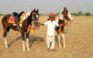 Pferdesafari in Asien
