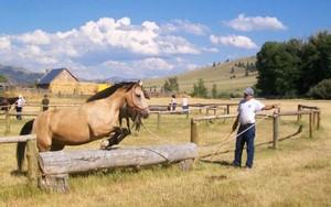 Pferdesafari in Nordamerika