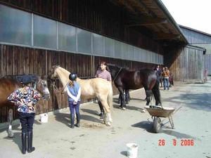 Ponyurlaub, Ponyferien Bayern