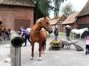 Reiterferien für Kinder in Niedersachsen