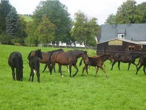 Pferde Zuchtbetrieb Familie Bauerdick