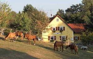 Der Reiterhof Reisach in Bayern
