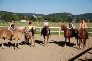 Reiterhof, Pferdezucht, Reitunterricht