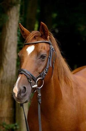 Eines unserer Pferde vom Reiterhof