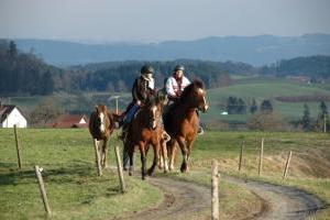 Reiterferien im Allgäu