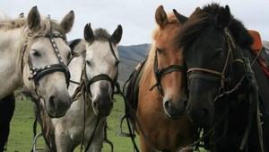 Reiturlaub und Reiterreisen in die Mongolei