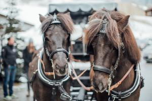 Romantische Kutschfahrt mit edlen Pferden