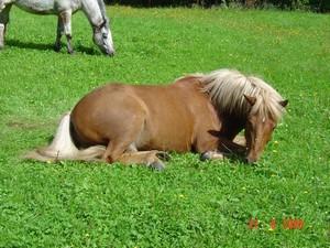 Unsere Ponys warten auf der Wiese!