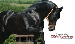 Sattel gut, Pferd besser, reiten schöner