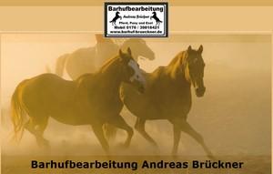 Hufpflege, Barhufbearbeitung Andreas Brückner