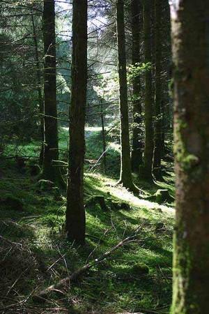 Ausreiten durch Wald und Wiesen