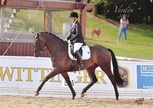 Pferdegutachten Sportpferde