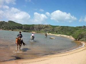 Sardinien mit Pferden