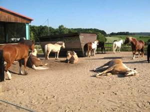zufriedene Pferde