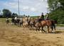 Reitunterricht auf Peter's Ponyhof