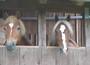 Pferde vom Reiterhof Landeck