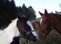 Unsere Pferde vom Reiterhof Erlenhof