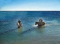 Strandritte und Reiten durchs Wasser