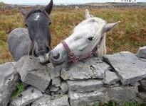 Reiten in Irland